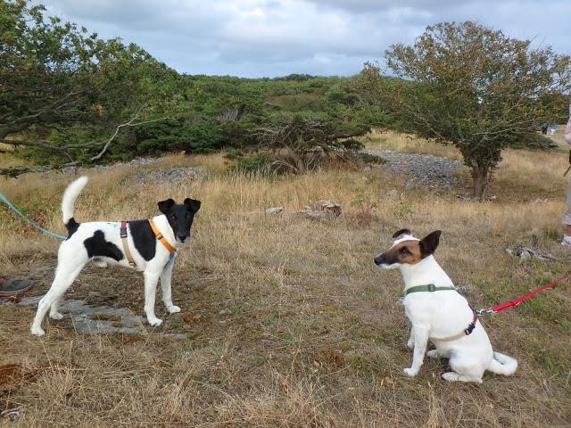 Hundar får medtagas - i koppel - Foto: Belinda Graham